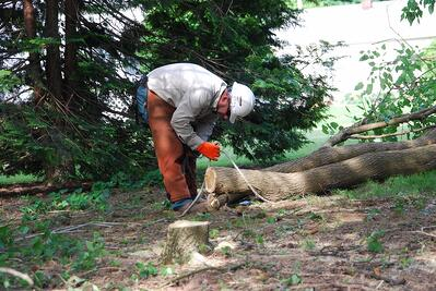 professionals tree removal winch line