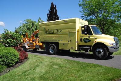 Joshua Tree tree service truck in Allentown, PA