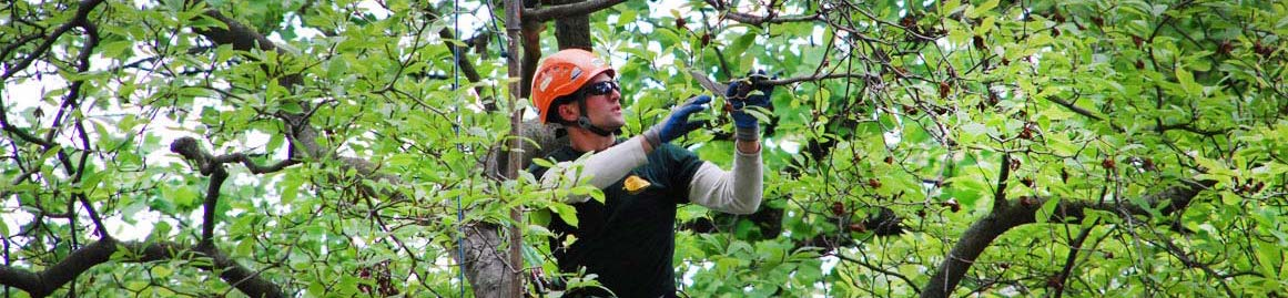Don't Lose Your Trees and Shrubs, Protect Them