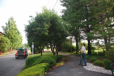 spraying trees for Spotted Lanternfly