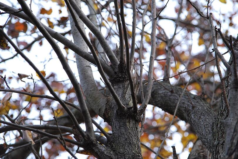 Cost and health benefits of proactive tree trimming services in Allentown, PA