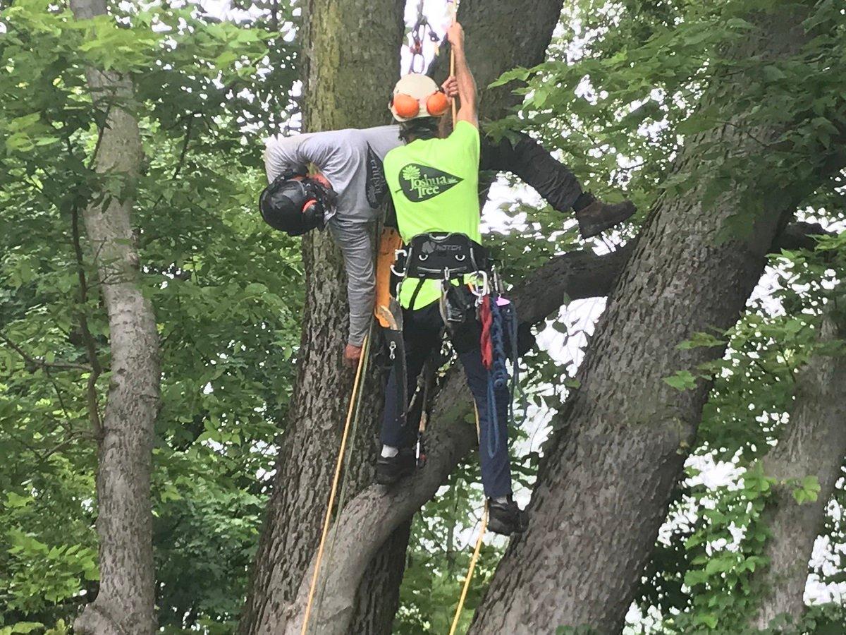 Joshua Tree rescue training