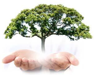 Ask The Arborist