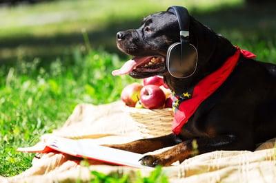 Dog in yard wearing headphones