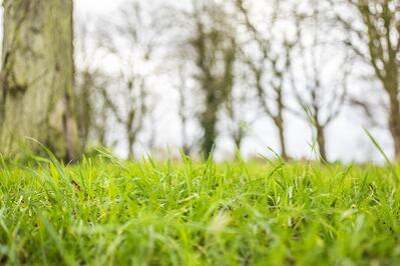 Bumpy lawn grass