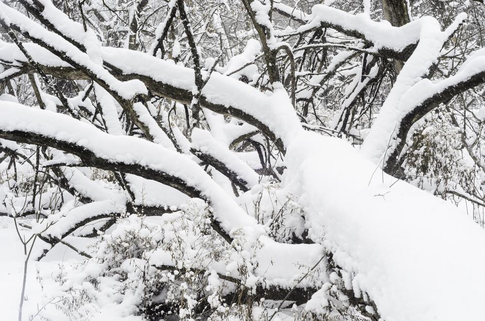 Nature abstract of complexity and commonalities in winter Snow covers fallen tree in woods during a winter storm in northern Illinois, USA