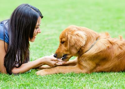 Dog and woman on pet-safe lawn