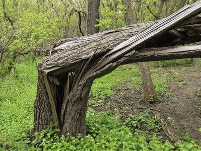 Storm damage broken tree