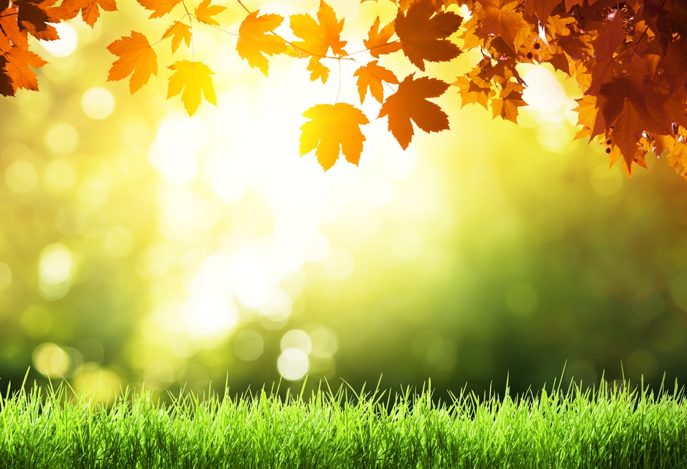 leaves and grass in autumn