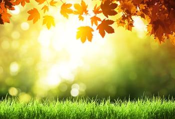 Sun setting  watering lawn