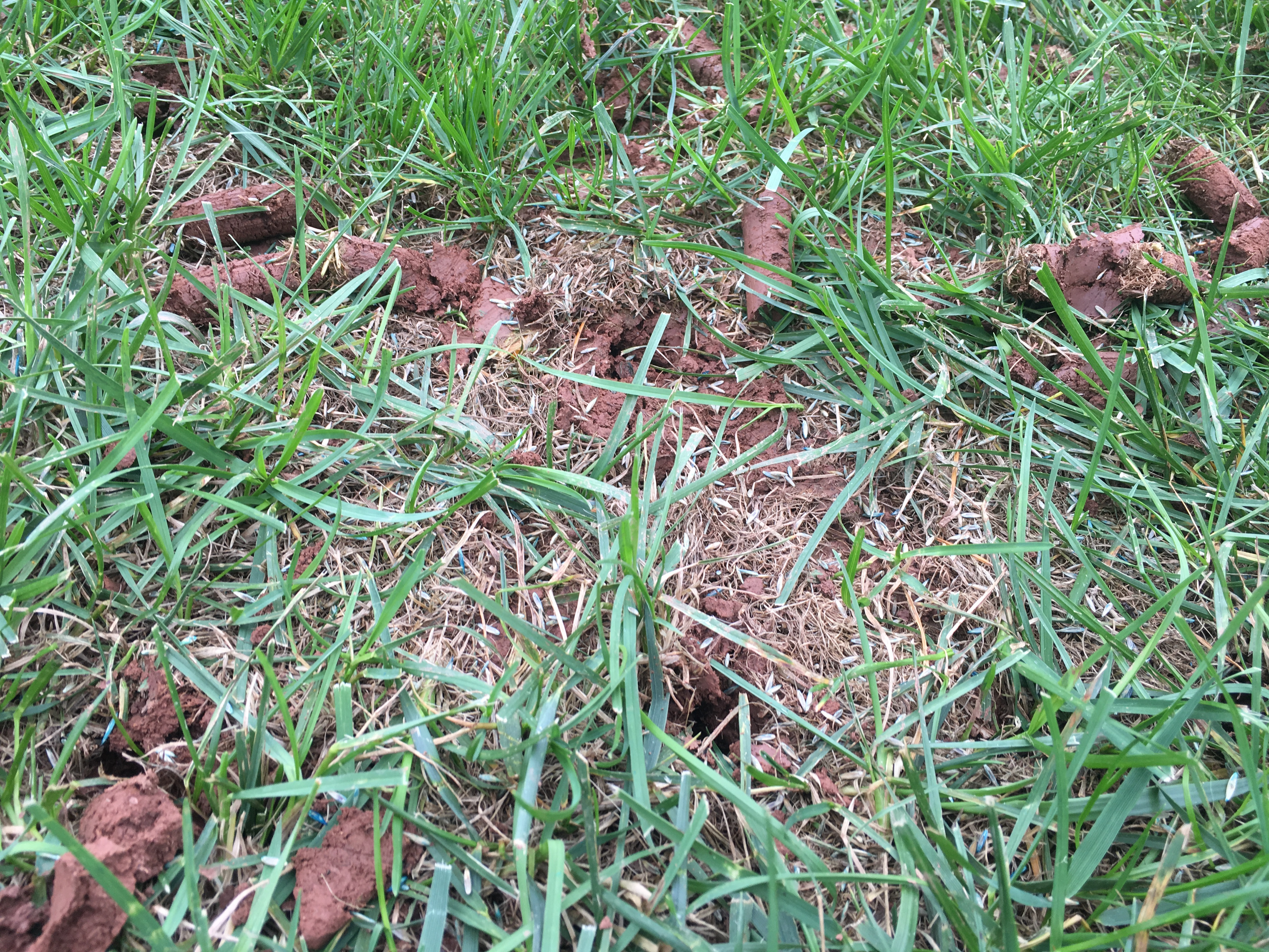 Soil cores from aerating