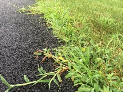 crabgrass-near-driveway
