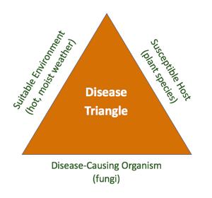 disease-triangle