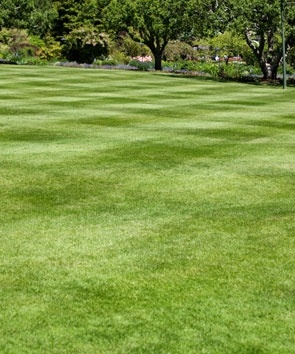 Lawn limestone treatment in Allentown, Bethlehem, and Easton, PA