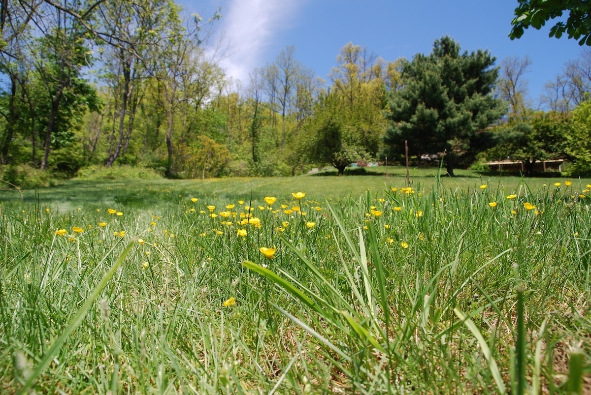 Lawn weed control services for Allentown, Bethlehem and Easton, PA
