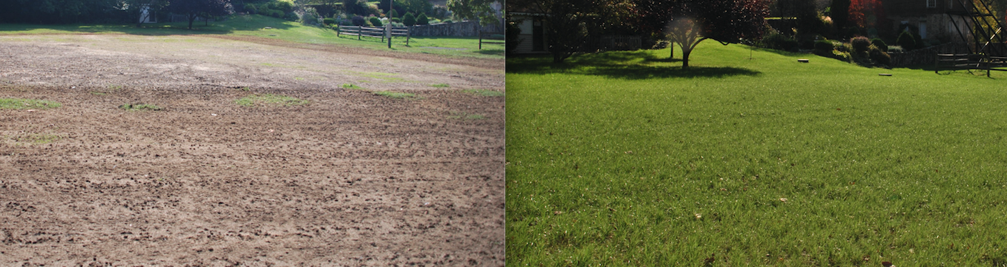 Say Goodbye to Your Thin, Ugly Lawn