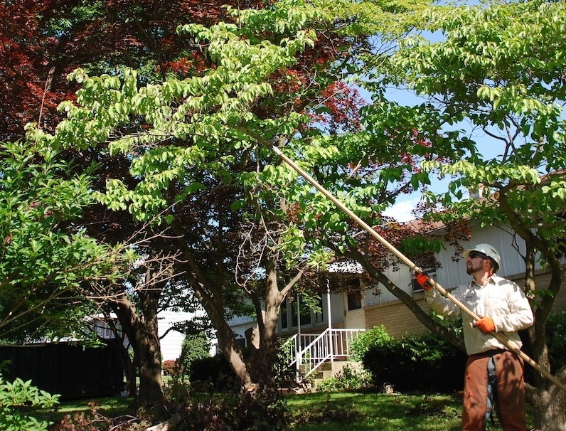 Tree care services in Allentown, Bethlehem, and Easton, PA