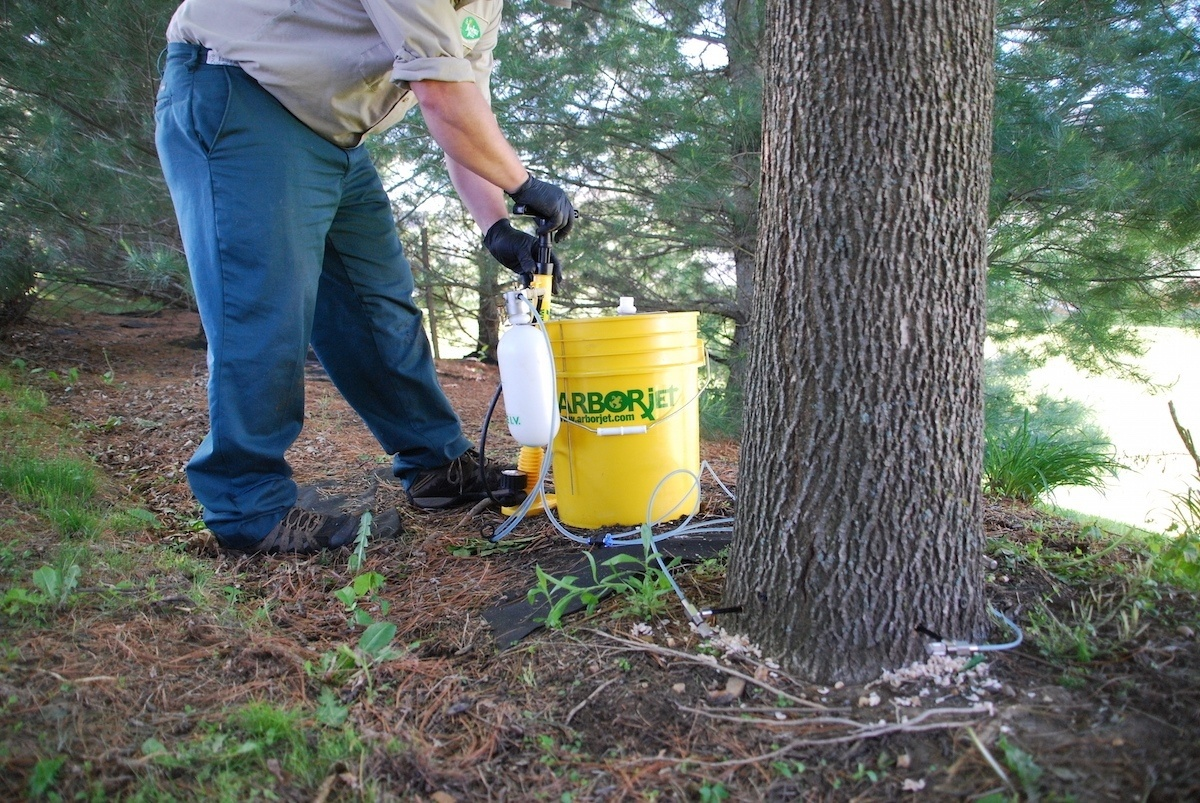 Tree disease control services in Allentown, Bethlehem, and Easton, PA