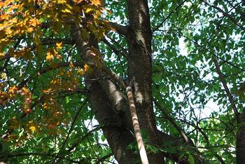Tree trimming services by Certified Arborists in Allentown, Bethlehem, and Easton, PA