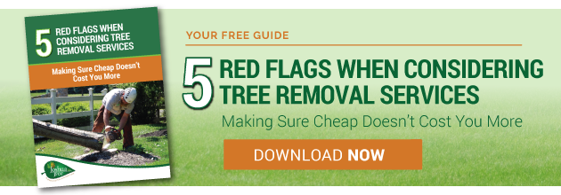 Red flags when hiring a tree removal service in Allentown, Bethlehem, or Easton, PA
