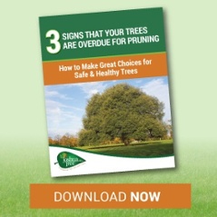 Signs that you need tree pruning by a tree service in Allentown, Bethlehem, or Easton, PA