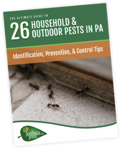 JT - pest guide - cover-2
