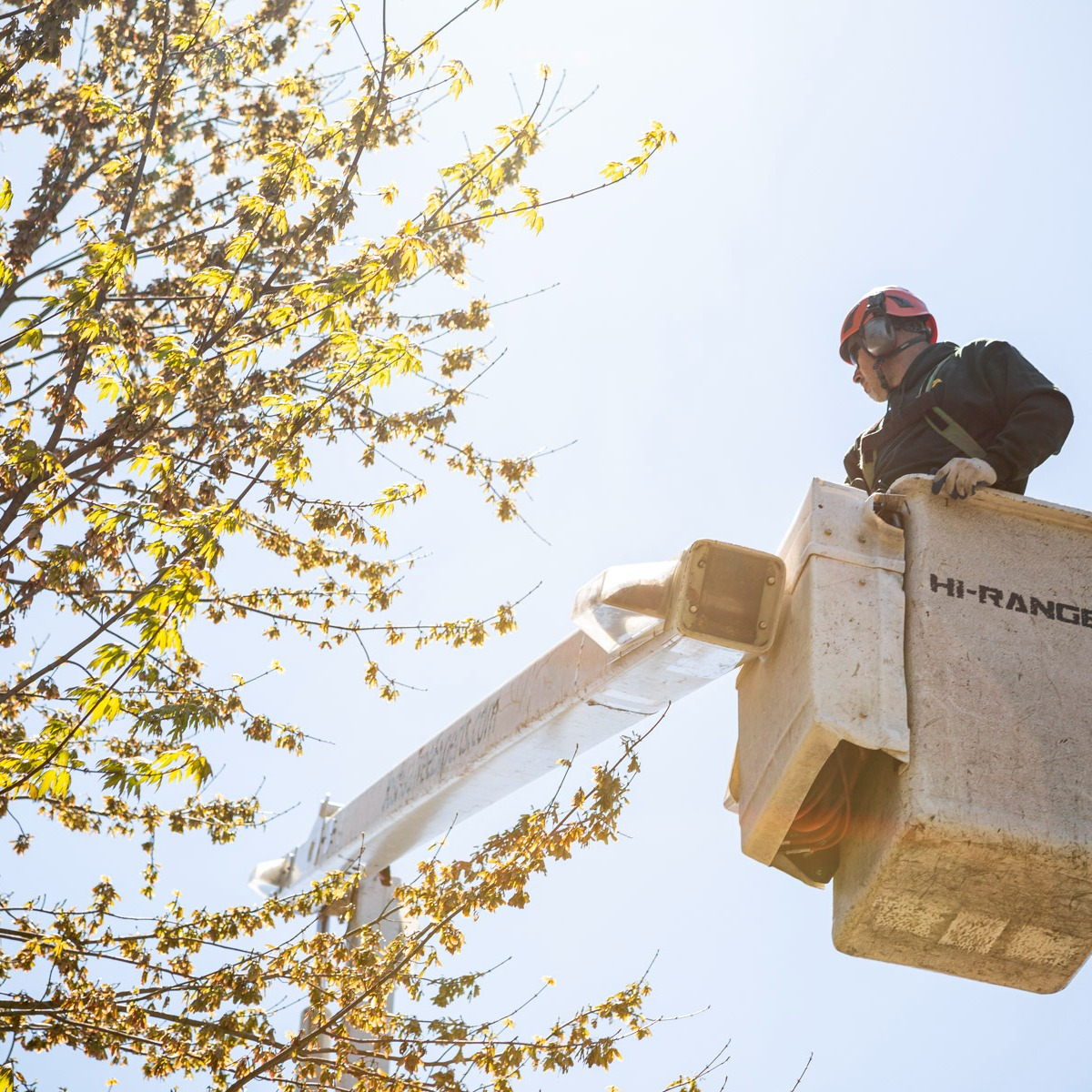 Commercial Tree pruning trimming