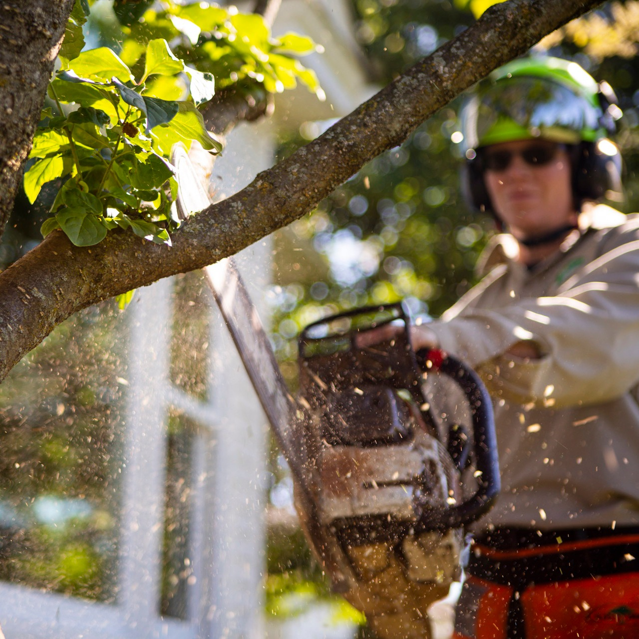 tree trimming Buxmont Lansdale, Collegeville, Chalfont, PA