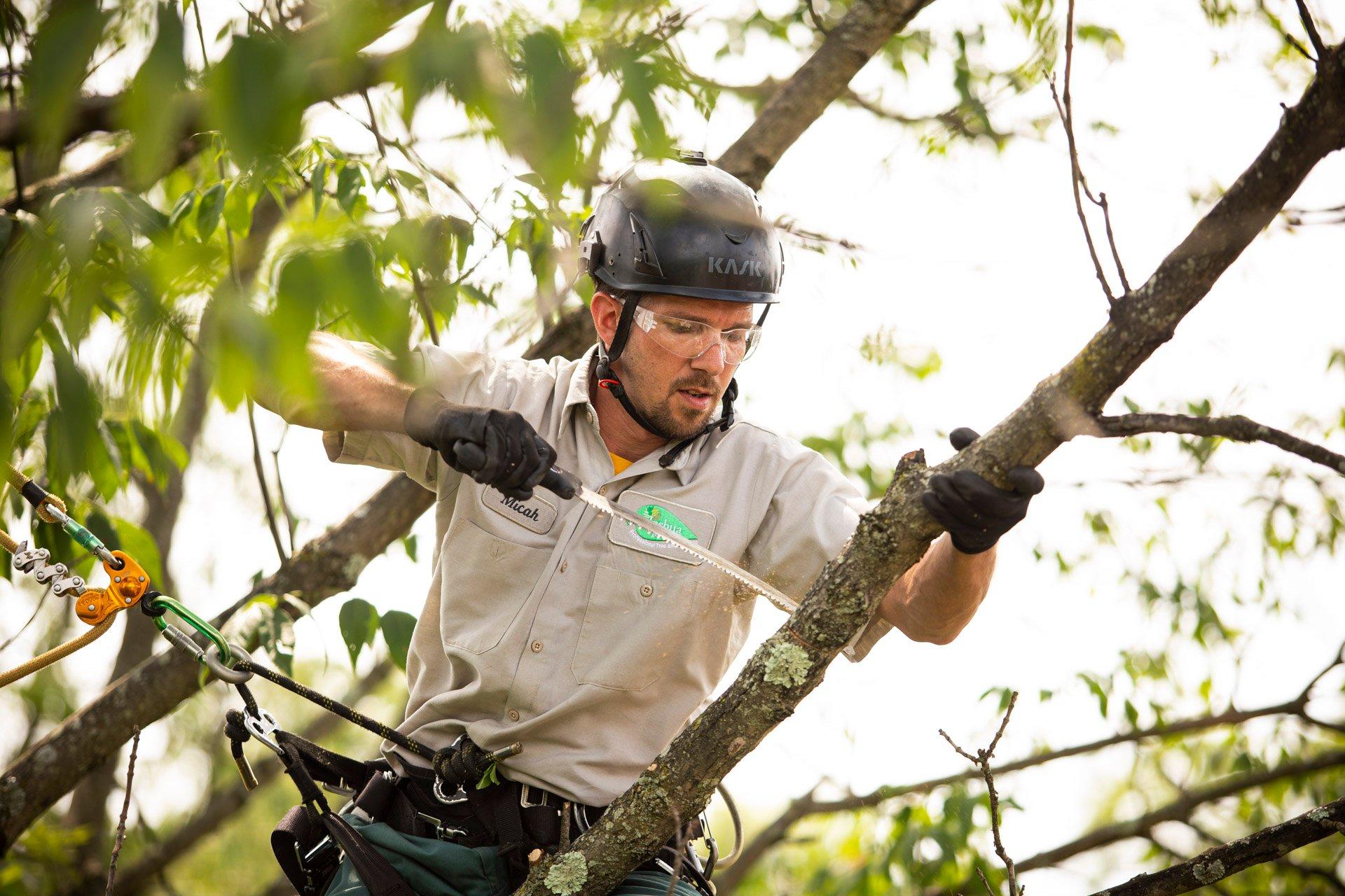 tree-climbing-pruning-technician-16