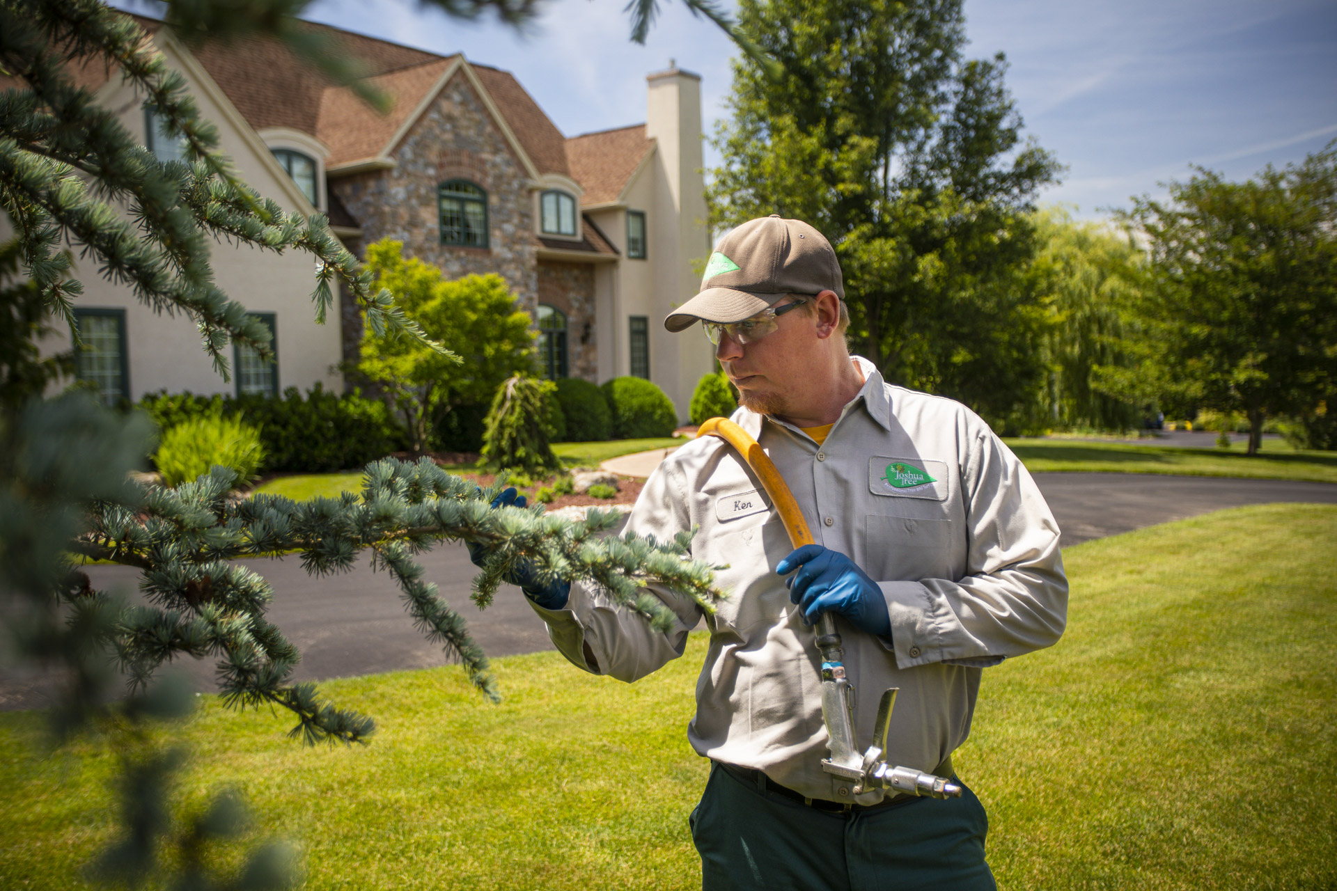 Will a Shrub or Tree Fungus Treatment Really Help? Realistic Expectations & Pro Tips for Concerned Homeowners