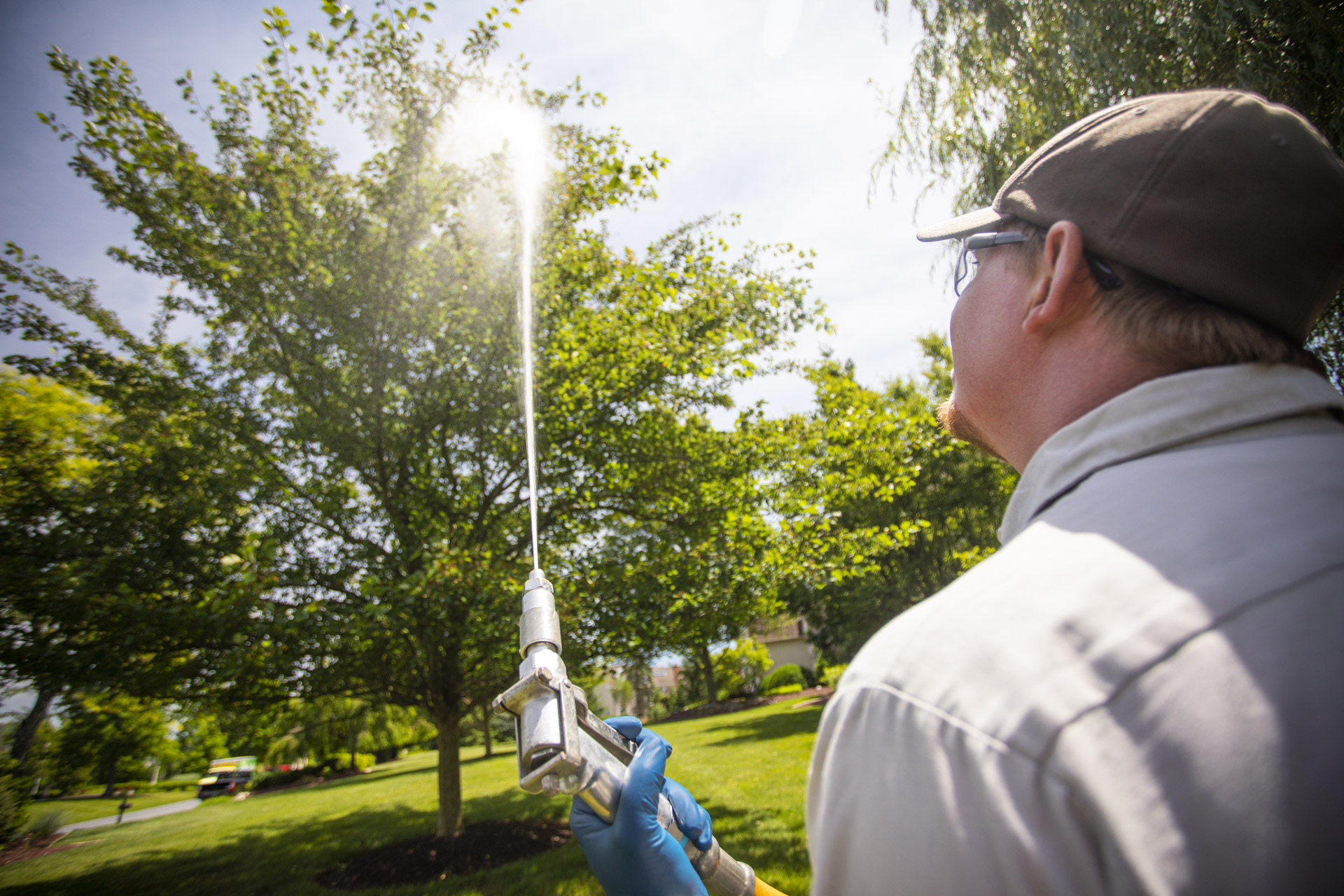 tree spraying service
