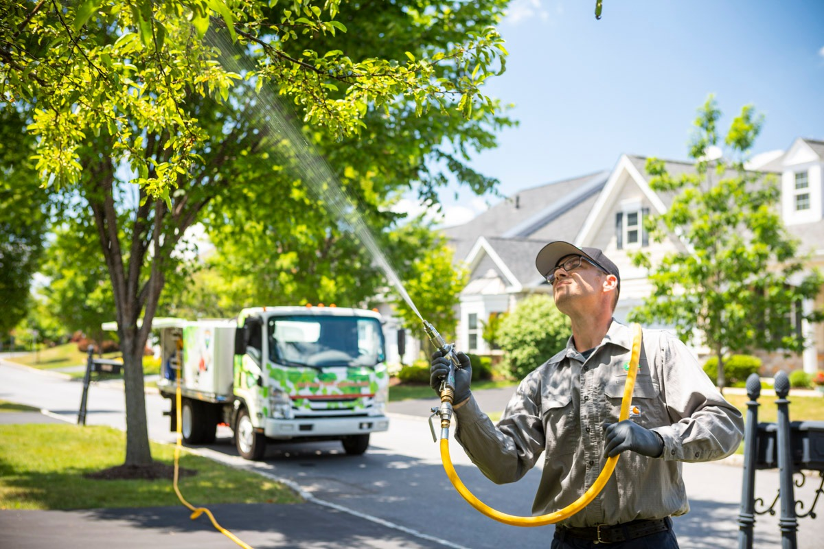 Tree spraying company Buxmont Lansdale, Collegeville, Chalfont, PA