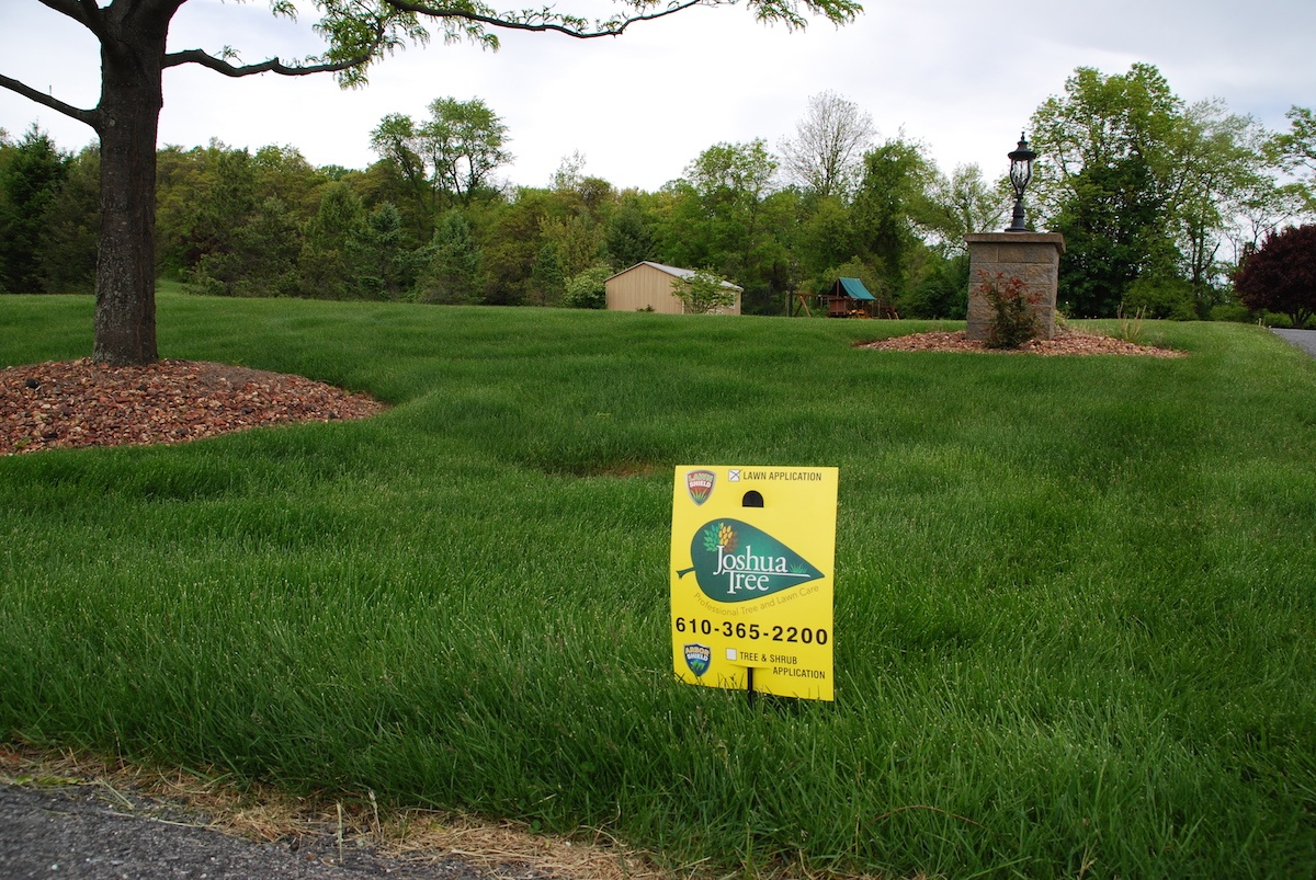 Can My Lawn Be Saved? Realistic Expectations & Pro Tips for Frustrated Homeowners