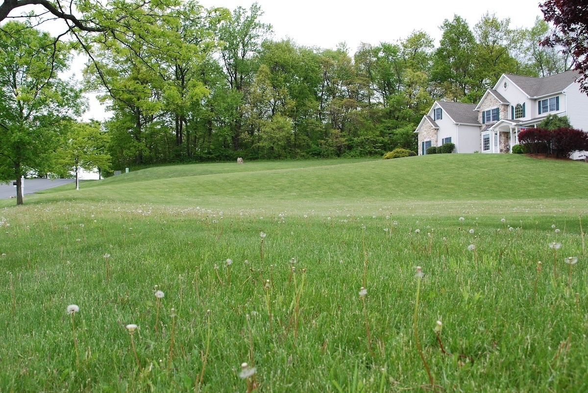 11 Weed Control Tricks All Lawn Care Services Should Use in Allentown, Bethlehem and Easton, PA