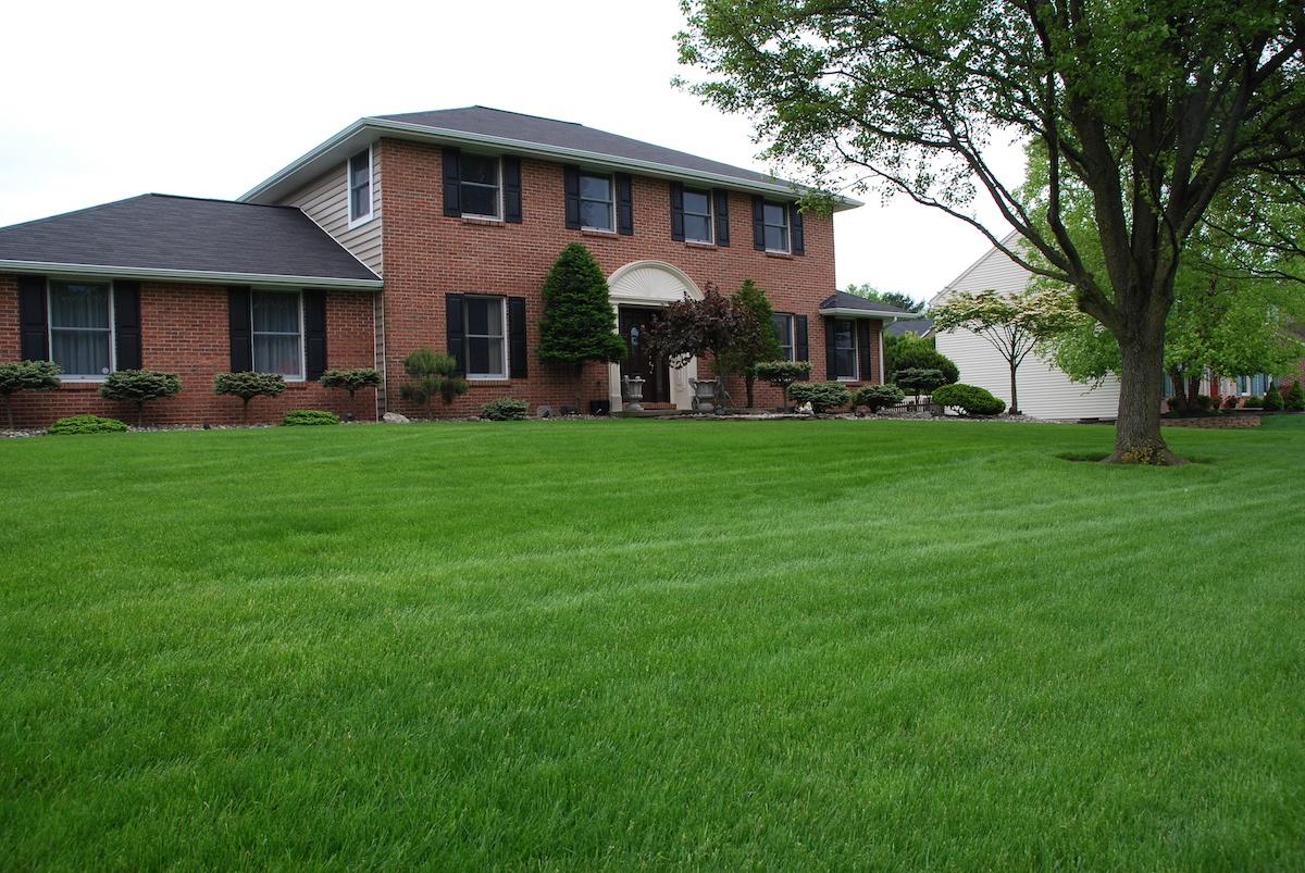 lawn-care-nice-grass-10.jpg
