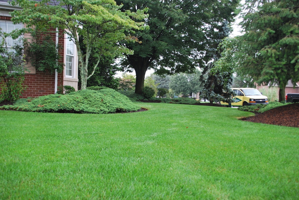 Joshua Tree vs. Lawn Doctor: Who's the Best Lawn Care Service in Allentown, PA