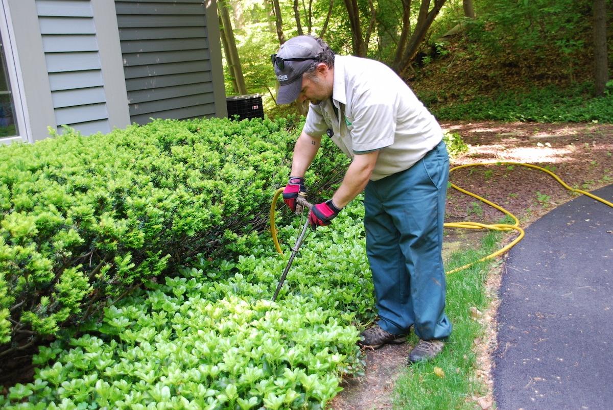 shrub fertilization