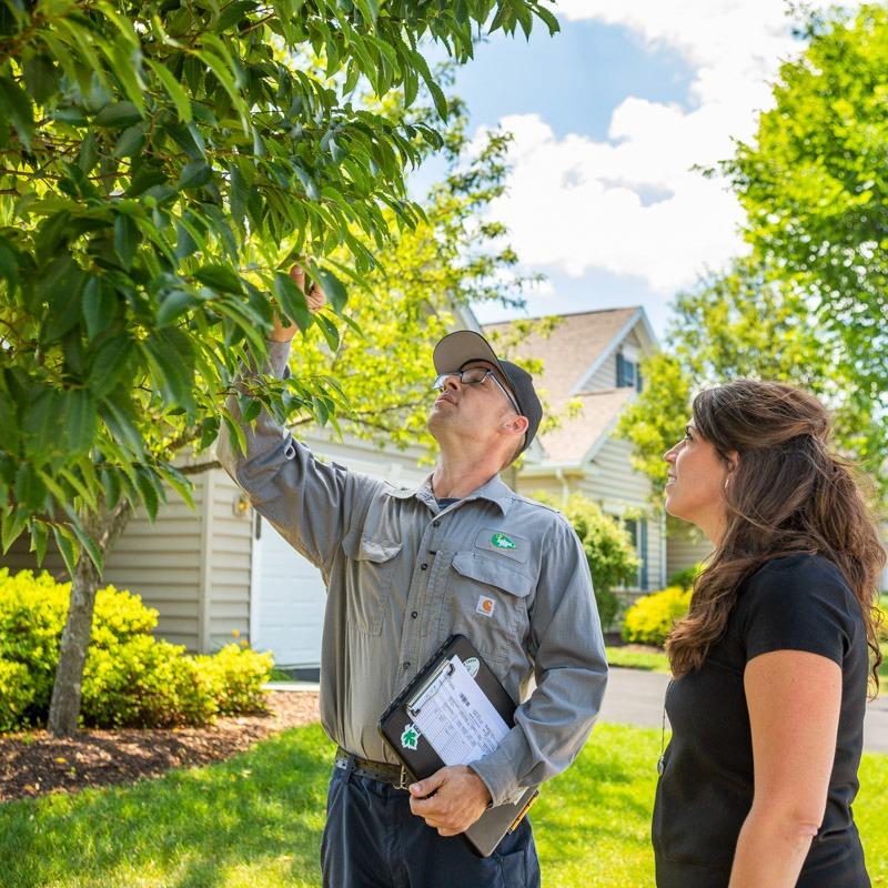 technician customer tree inspection 3
