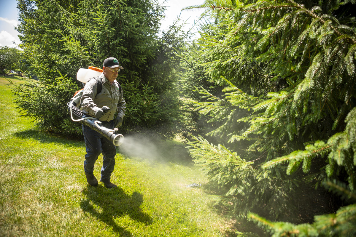 mosquito control technician spraying around trees