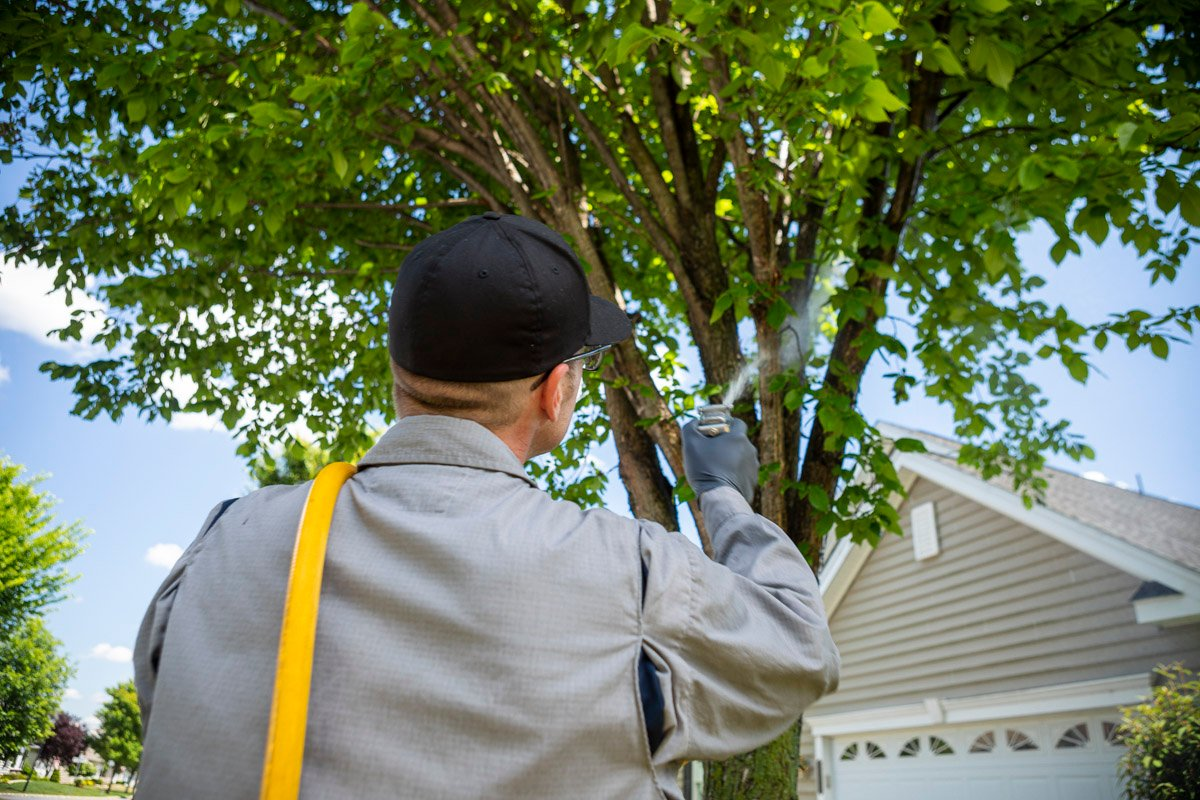 tree spraying services