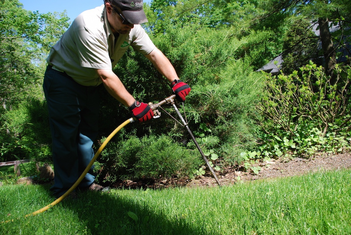 4 Important Facts About Fertilizing Trees