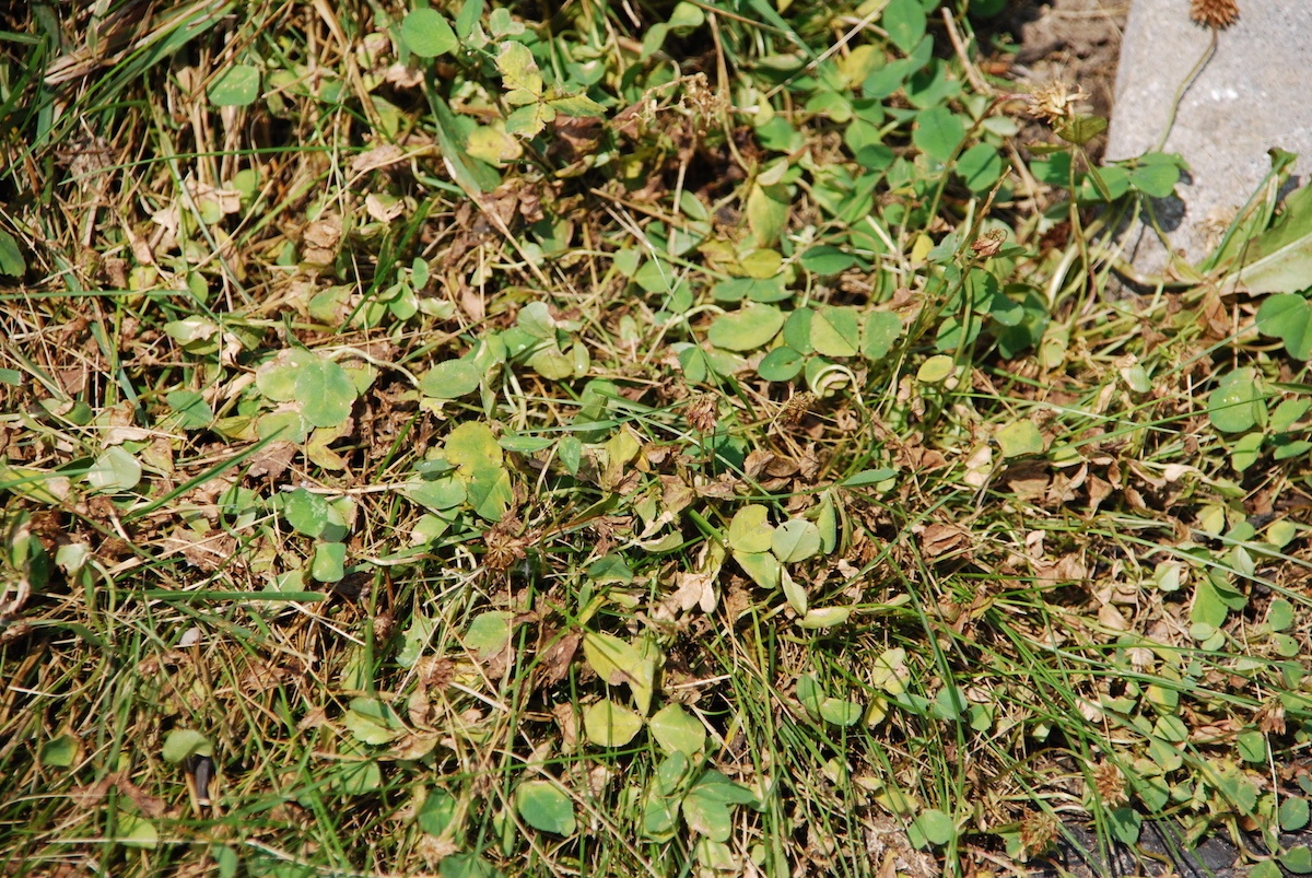 9 Weed Control Facts You May Not Know: Lawn Care Tips for Lehigh Valley Homeowners