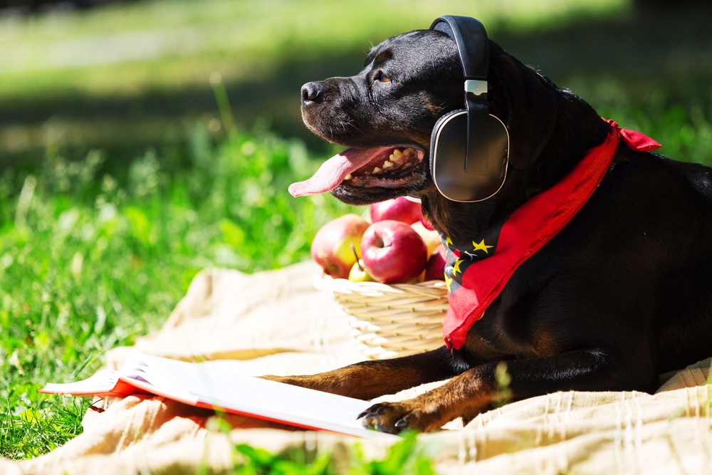 Is Lawn Care Safe for Dogs and Other Pets?