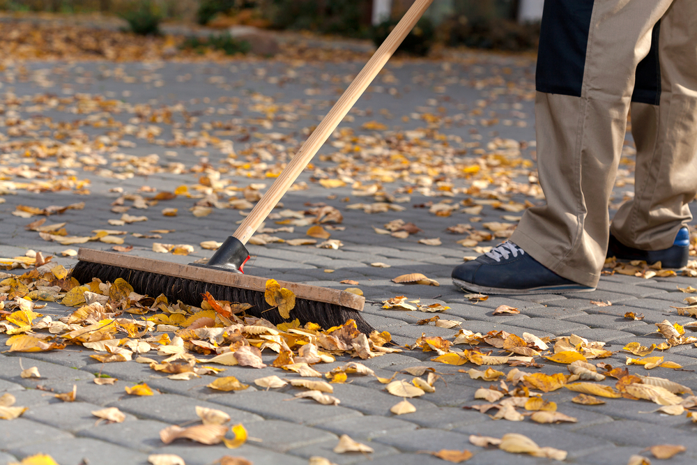 Why Are My Trees Dropping Leaves in Spring or Summer? Answers for Lehigh Valley Homeowners
