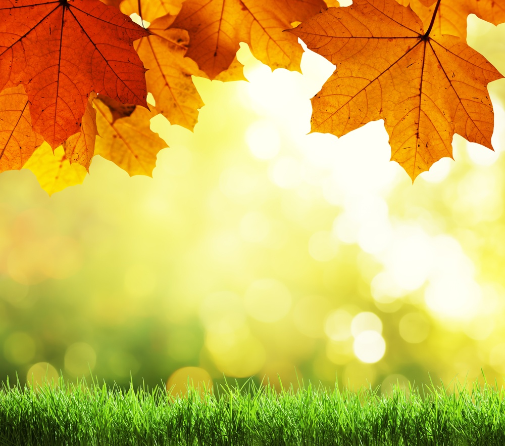 6 Fall Lawn Care Tips for Beautiful Grass in Pennsylvania