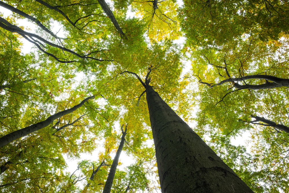 7 Tips to Save the Trees