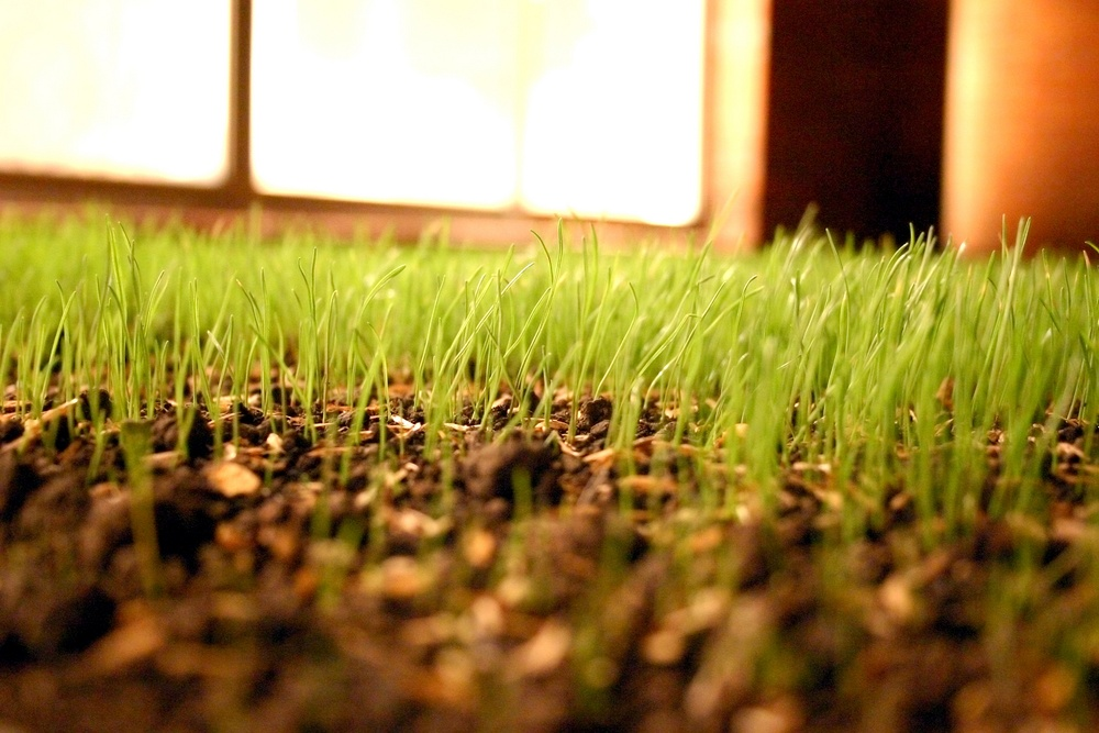 How to Water Grass Seed After an Aeration and Seeding